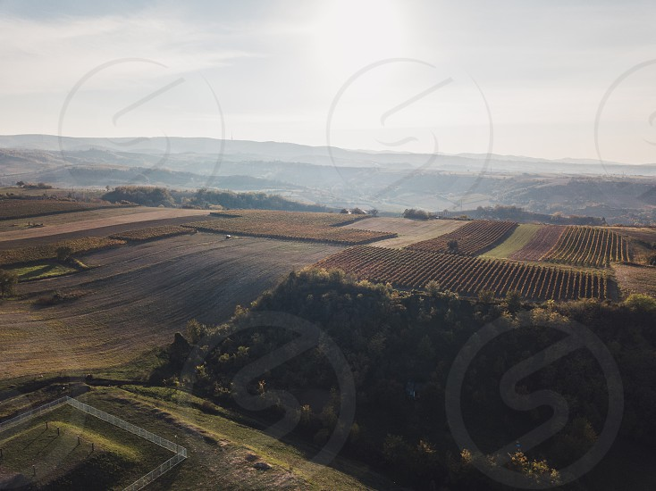 Aerial view of the vineyards in sunset photo