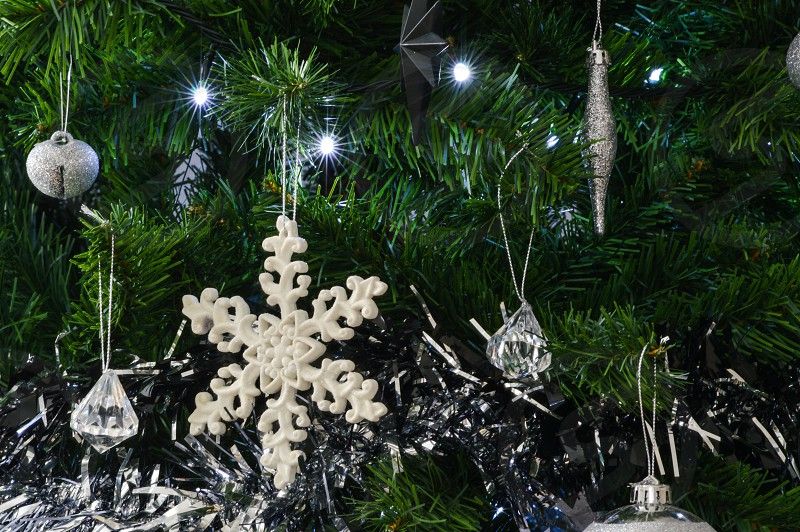 Christmas twinkles photo
