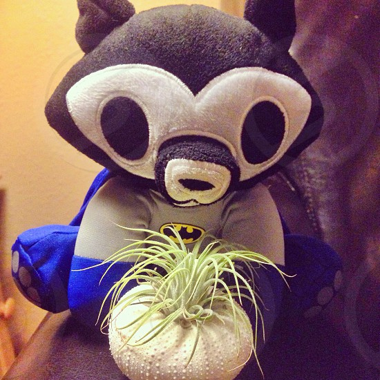 black grey and blue batman plush beside potted green and white spider plant photo