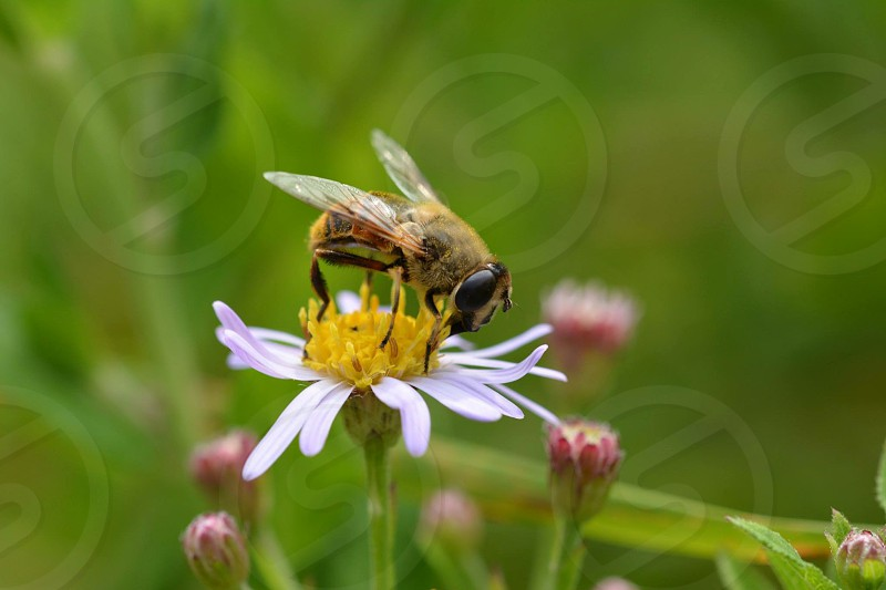 close-up photo of honey bee on yellow flower during daytime photo