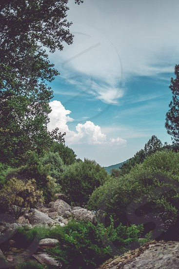 Pines rocks and other trees and blue sky in a sunny day in the mountain of Gredos photo