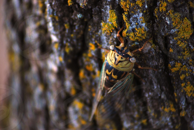 yellow and black dragonfly on mossy rocks photo