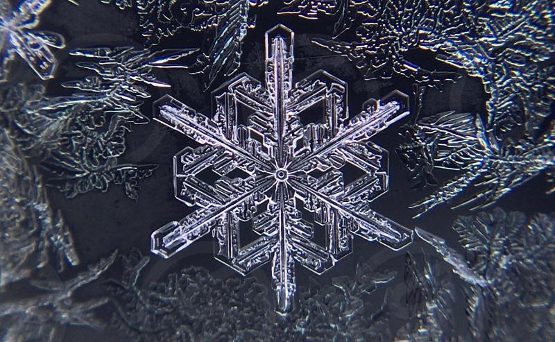 black and white snowflakes photo