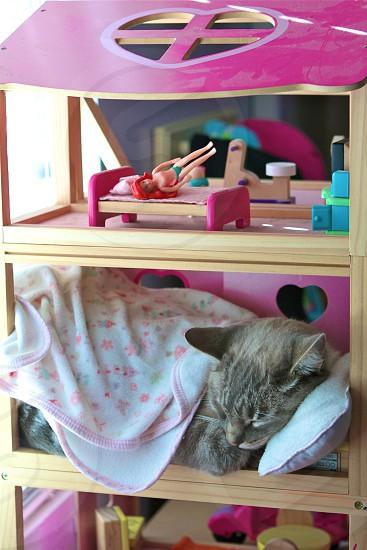 Tiger's Dollhouse photo