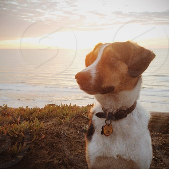 jack russell terrier sitting on sun rise photo