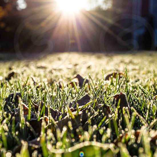 sunlight rays through green grass photo