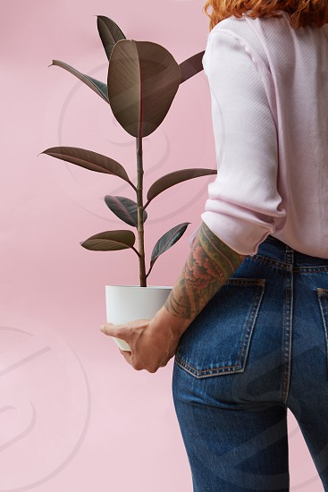 Woman standing with her back holding a flower of a ficus in a flowerpot on a pink background. Flowers shop concept photo
