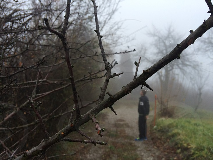 Branch fog photo