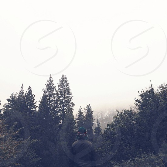 Tippy tops of trees  photo