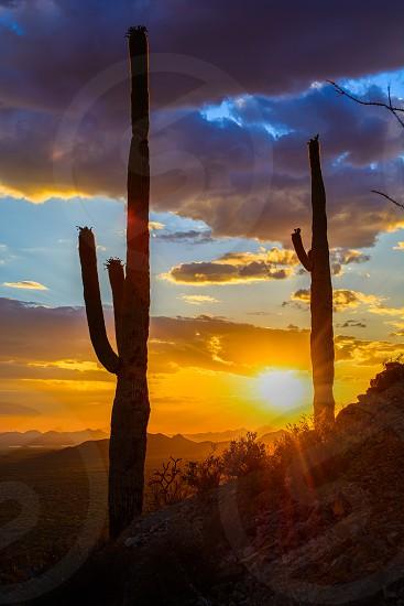 Saguaro's at Sunset photo