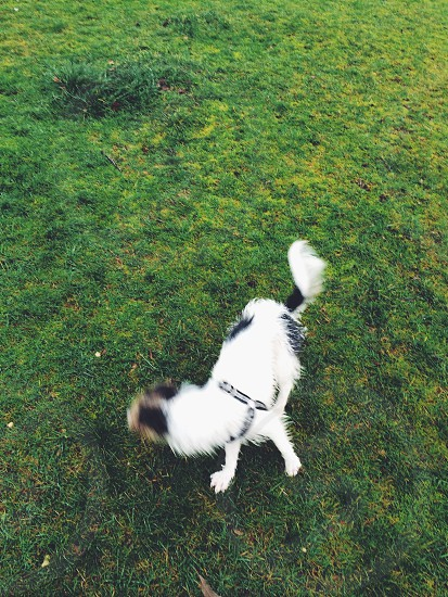 Dog playing in the park photo