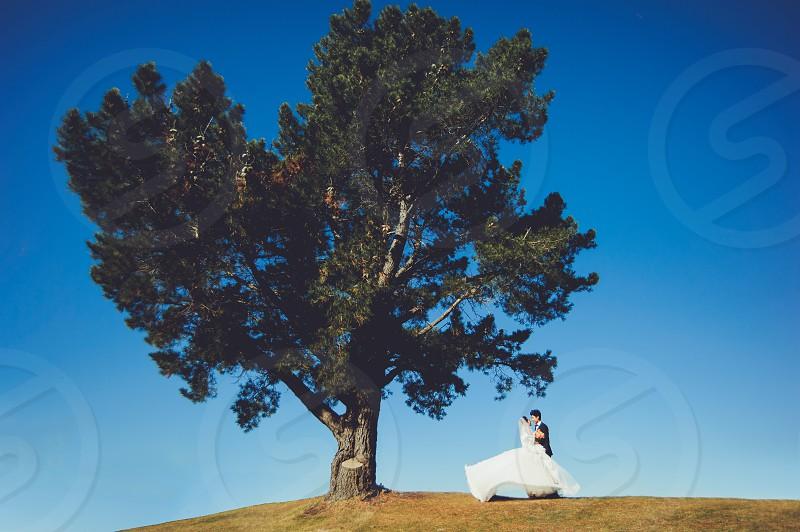WEdding couple under a large oak tree photo