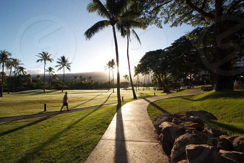 Hawaii sunrise maui silhouette palm trees photo