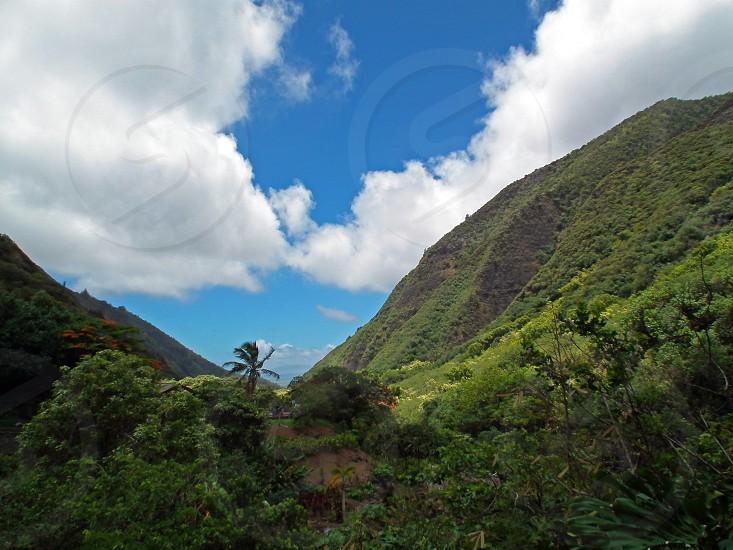 view of trees on mountain photo