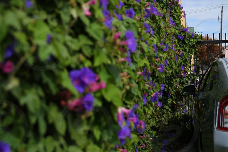 Prius Flowers photo