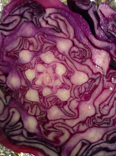 Cut red cabbage photo