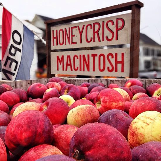 honeycrisp macintosh photo