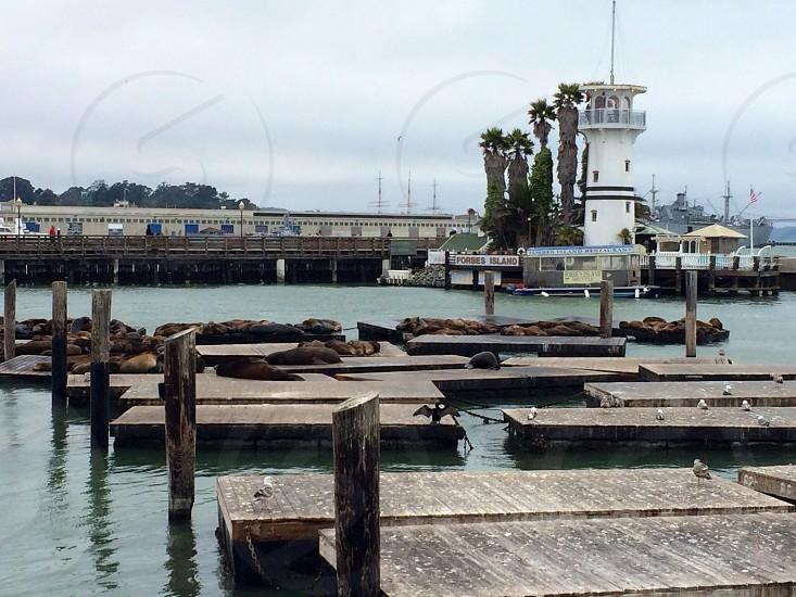 Pier39. San Francisco California photo