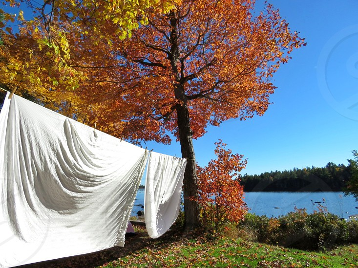 household chores laundry wash line clothesline blue sky maple trees colorful leaves fall autumn fresh air sunshine clean refreshing ivory sheets green grass lake homestead natural photo
