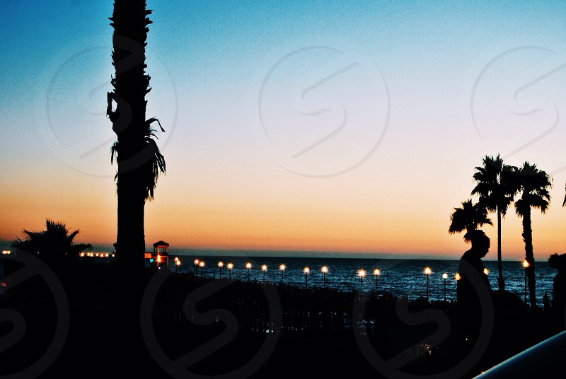 beach trees photo photo