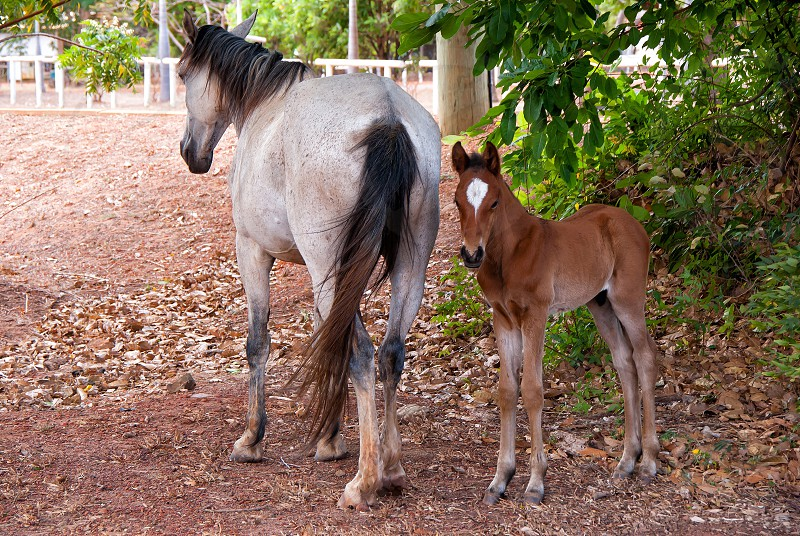 A horse and a foal photo