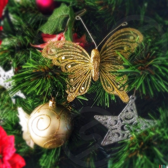 brown hairstreak butterfly christmas decor photo