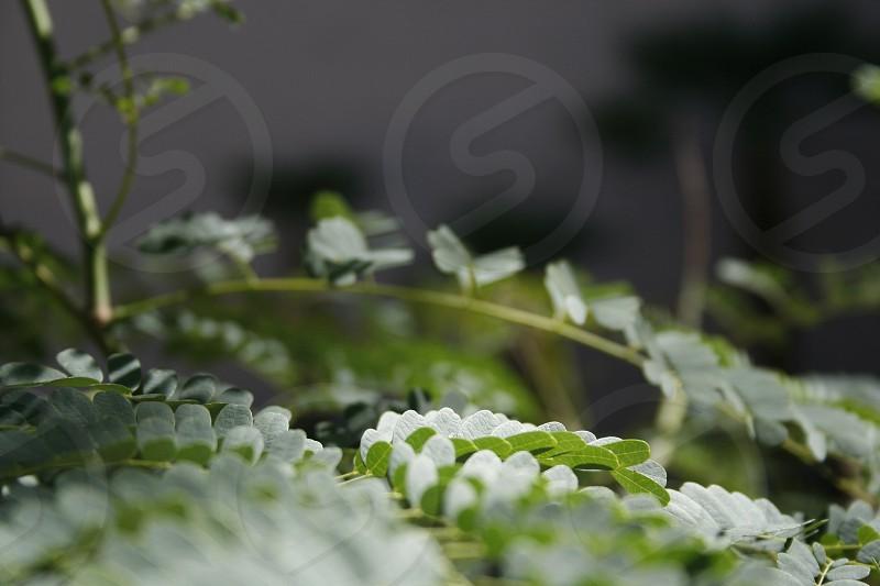 white green butterflies photo