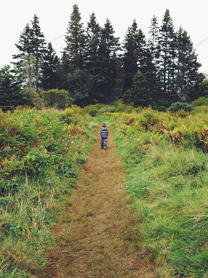 A young boy walks in a trail in Lane's Island Preserve Vinalhaven Maine. photo