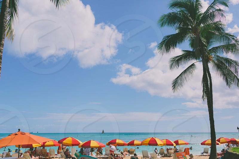 A view of colourful beach umbrellas lining the beach in Hawaii.  photo