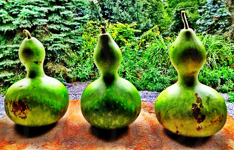 Electric Gourds. photo