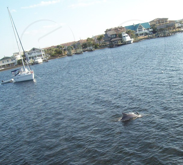 Ocean Destin Fl Dolphin boat scene oceanfront views photo