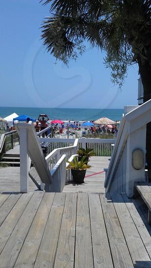 Beach side Palm tree Surfside SC photo