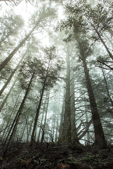 Trees Forrest Fog  Travel Adventure Nature Light Sunset Exploration Fitness Lifestyle  California San Francisco photo