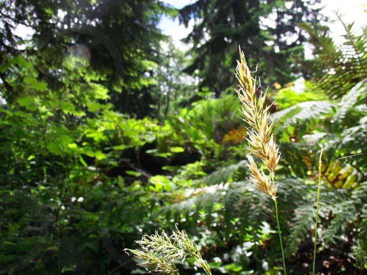 Nature. Rife Lake Washington photo
