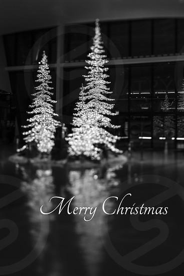 Card Christmas merry Christmas winter trees sparkle lights photo