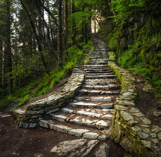 Green path stairs stone woods trees photo