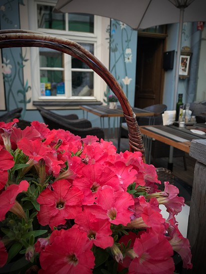 Outdoor day colour vertical portrait Riga Latvia food dining restaurant alfresco spring summer travel tourism tourist wanderlust Europe European basket pink petunias flowers blooms flora bright vivid colourful traditional pretty photo