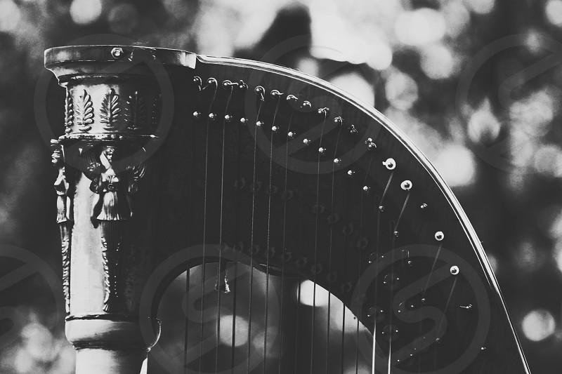 Black and white harp. photo