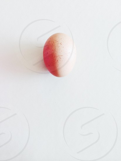 beige poultry egg photo
