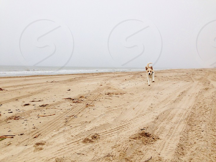 dog running on brown sand pet photography photo