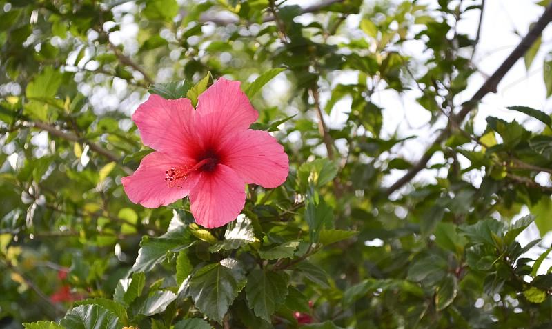 A flower photo