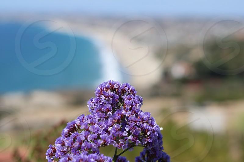 selective focus photography of purple lavender photo