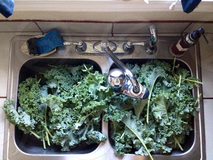 Kale kale and more kale! photo