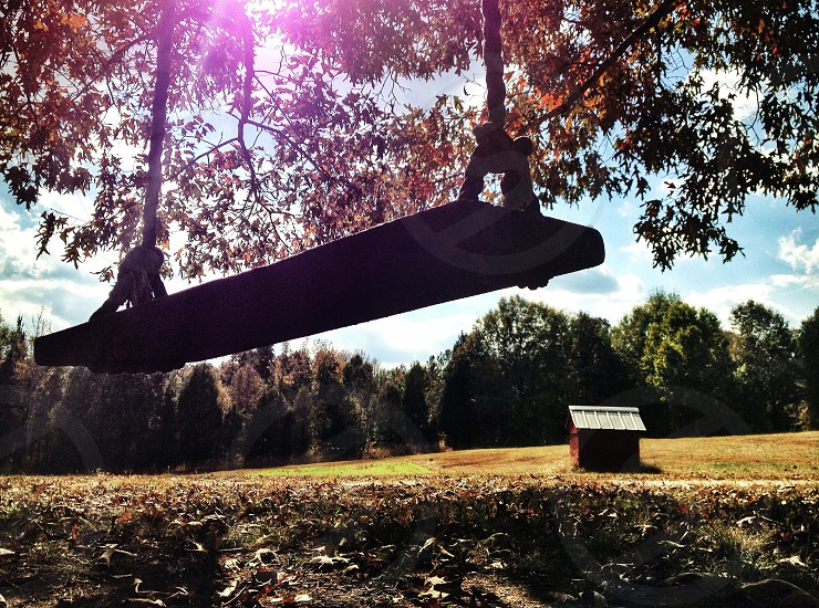 wooden swing hanging from tree photo
