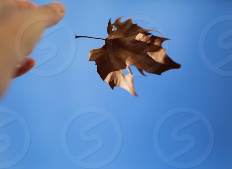 Falling fall leaf blue sky hand photo