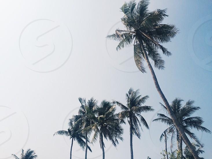 Thailand Koh Samui palm tree paradise photo