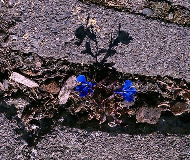 beauty finds a way photo