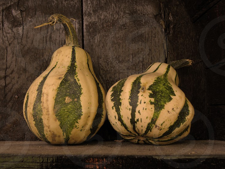 Two little cute pumpkins on wooden surface. photo