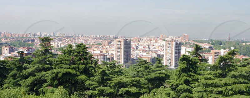 Madrid cityscape above the trees photo