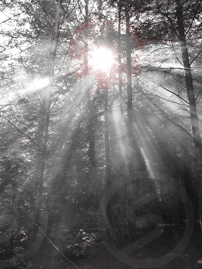 Sunlight through the fog and trees photo
